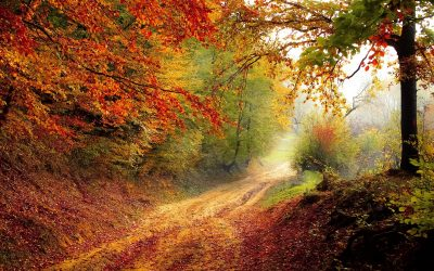 Autumn and keeping the light within…